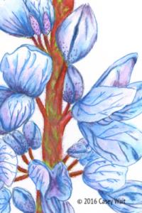Silver Stem Lupine Flower
