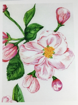 Apple Blossom Greeting Card Front